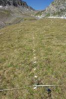 Von der Krummsegge dominierter Pflanzenbestand in den Schweizer Alpen. Durch systematische Beprobung und molekulare Fingerprints werden die Grösse von Klonen und indirekt ihr Alter analysiert . Quelle: (Foto: L. de Witte) (idw)