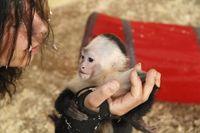"Kapuzineräffchen Mally mit Pflegerin Jenny. Bild: ""obs/Serengeti Park Hodenhagen"""