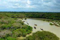 Tropisch/subtropischer Monsun-Sumpfwald (Symbolbild)
