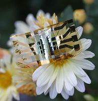Neue Hightech-Solarzelle schwebt auf Blütenblättern.