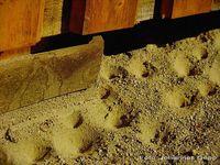 Fangtrichter der Ameisenlöwen liegen an geschützten Stellen. Ameisen sind eine häufige Beute. Bild: Johannes Gepp, Graz