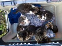 Katzenkinder (Symbolbild) Bild: Unbekannt