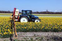 Landwirtschaft: Traktor bei der Ausbringung eines Pflanzenschutzmittels in einem Narzissenfeld