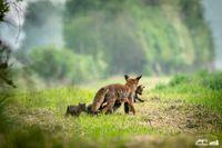 """Bild: """"obs/Wildtierschutz Deutschland e.V./Timo Litters, Wildtierschutz Deu"""""""