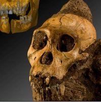 Australopithecus Sediba: Urahn des Menschen. Bild: Uni Zürich