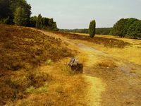 Durch gezielte Drainagierung, Trockenlegung von Sümpfen, Mooren, Abholzung von Wäldern und Versiegelung von Flächen, wird Stück für Stück das Wasser aus der Landschaft verbannt(Symbolbild)