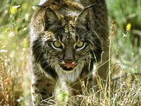 © WWF Spanien / Jesús Cobo