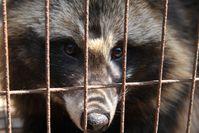 """Bild: """"obs/Deutsches Tierschutzbüro e.V./Animal Equality"""""""