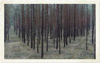"""Monokulturwald: Nach längst veralteten Vorstellungen sollte alles """"aufgeräumt"""" sein. Lebewesen die sich von totem Holz ernähren und damit leben, wurden fast ausgerottet (Symbolbild)"""