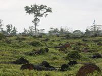 Gerodeter Regenwald für Palmölplantage, Elfenbeinküste. Bild: Hartmut Jungius / WWF-Canon
