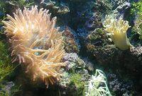 Die Nesseltiere (Cnidaria') sind einfach gebaute, vielzellige Tiere, die die Küsten, den Grund und das offene Wasser der Weltmeere und einige Süßgewässer bewohnen und durch den Besitz von Nesselkapseln gekennzeichnet sind. Bekannte Untergruppen sind Schirm- und Würfelquallen, die sessilen Blumentiere mit den Seeanemonen, Stein- und Weichkorallen sowie die vielgestaltigen Hydrozoen, zu denen auch die Staatsquallen und der in Bächen und Flüssen in Mitteleuropa heimische Süßwasserpolyp gehören.