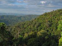 Regenwald / Urwald im Taman Negara National Park (Symbolbild)