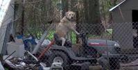 "Bild: Screenshot Youtube Video ""Solemn Tornado Broadcast Interrupted by Dog on Lawnmower"""
