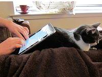 Zu viele Geräte, zu wenig Breitband. Bild: Flickr/Belmont