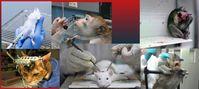 Tierversuche: Sinn- und nutzlose Qual für Tiere und Freude für Folterer (Symbolbild)