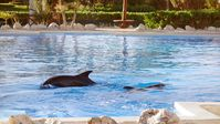 "Trostlos: Delfinpool im Hotel Gran Bahia Principe Tulum, Mexiko. Bild: ""obs/Gesellschaft zur Rettung der Delphine e.V."""