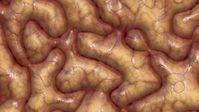 Gehirn: Genmutation verändert Intellekt . Bild: pixelio.de, G. Altmann