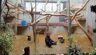 Leidvolle Schimpansenhaltung in deutschen Zoos. Bild: PETA