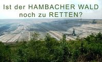 Hambacher Wald: Uralte Bäume sollen für kurzfristige Ausbeutung und Profitgier zerstört werden.