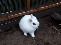 Wer hat dieses Kaninchen gesehen?