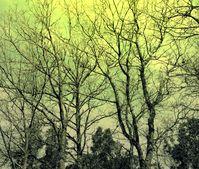 Vertrocknete Bäume (Symbolbild)