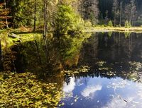Ellbachsee, Wald (Symbolbild)