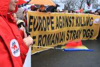 VIER PFOTEN unterstützt die Proteste in Bukarest. Bild:  (c) VIER PFOTEN