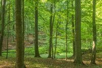 Waldmoor im Grumsin