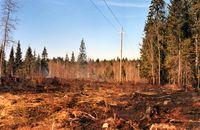 Trockener Industrie-Wald (Symbolbild)