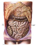 Darm: Das zweite Gehirn im Menschen (Emotion)