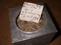 Grasprobe aus dem Archiv von Rothamsted (GB) Bild: Ines Köhler / TUM