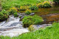 Naturbach, Wasser, Natur (Symbolbild)