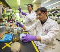Wissenschaftler testen Biosprit für Flugzeuge.
