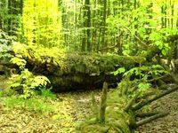 Wilder Wald (Symbolbild)