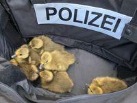 Bei der Polizei in Sicherheit! Bild: Recklinghausen