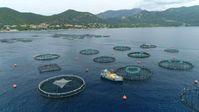 Auf dem Meer vor Korsika werden Fische in großen Netzen gezüchtet.  Bild: ZDF/Grand Angle Productions - 2021 Fotograf: 3sat