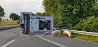 Ein Viehanhänger von einem LKW ist mit Schweinen beladen in der Kurve aus bisher ungeklärter Ursache umgekippt. Bild: Feuerwehr