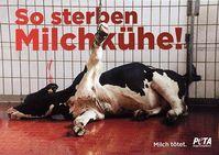 PETA-Plakat zum Leiden von Kühen in der Milchindustrie. Bild: PETA