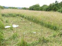 Untersuchungsfläche bei Bayreuth: Die Wiese weist eine hohe Artenvielfalt auf, während die Produktion von Biomasse ein mittleres Niveau erreicht. Ein Teil der Fläche ist bereits abgeerntet. Quelle: Foto: Reinhold Stahlmann, Universität Bayreuth; zur Veröffentlichung frei. (idw)