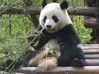Bild: Susanne Honnef / WWF