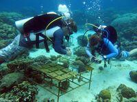 Arbeit an Siedlungsplatten für Korallenlarven, Spermonde, Indonesien Quelle: Foto: Pia Kegler, ZMT (idw)