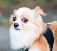 Hund: Stadttiere ängstlicher.