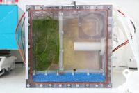 Das Aquarium ist das Herzstück des Experiments: Links ist das Hornkraut zu sehen, unten der Filter und rechts eine Schnecke im Fischabteil. In dem runden Abteil oben rechts werden die Fischeier eingesetzt – der Futterautomat für die späteren Larven und auch für die Fische befindet sich direkt darunter.