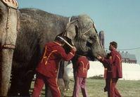 """Elefanten werden immer mit dem sogenannten Elefantenhaken """"geführt"""". Er hat ein spitzes Ende. Damit stechen die Trainer oder Pfleger in die empfindliche Haut von Elefanten und fügen ihnen so Verletzungen und Schmerzen zu. Die elefantenhaut ist so sensibel, dass Insentenstiche wahrgenommen werden können. Bild: PETA"""