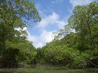 Tropischer Regenwald in Amazonien, Brasilien