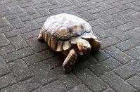 """Schildkröte """"Schildi"""" Bild: Polizei"""