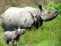 "Bild: ""obs/Bhaskar Choudhury/IFAW - Int. Tierschutz-Fonds"""