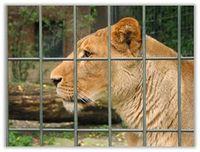 Leidvolles Leben im Zoo für Löwe & Co. Bild: PETA