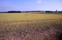Großflächige Abtötung von Pflanzen auf einem Acker bei Medingen mittels Roundup. Bild: Holscher / wikipedia.org