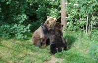 Bild: VIER PFOTEN - Stiftung für Tierschutz